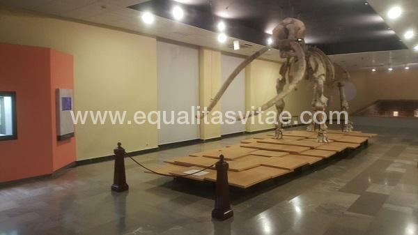 imagen principal de MUSEO PROVINCIAL DE CIUDAD REAL