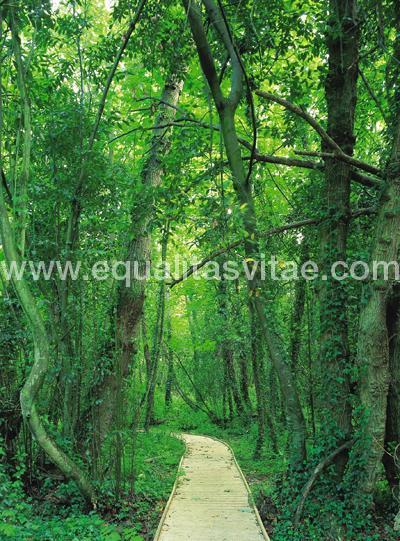 Jardin Botanico Atlantico Accesible En Gijon Asturias