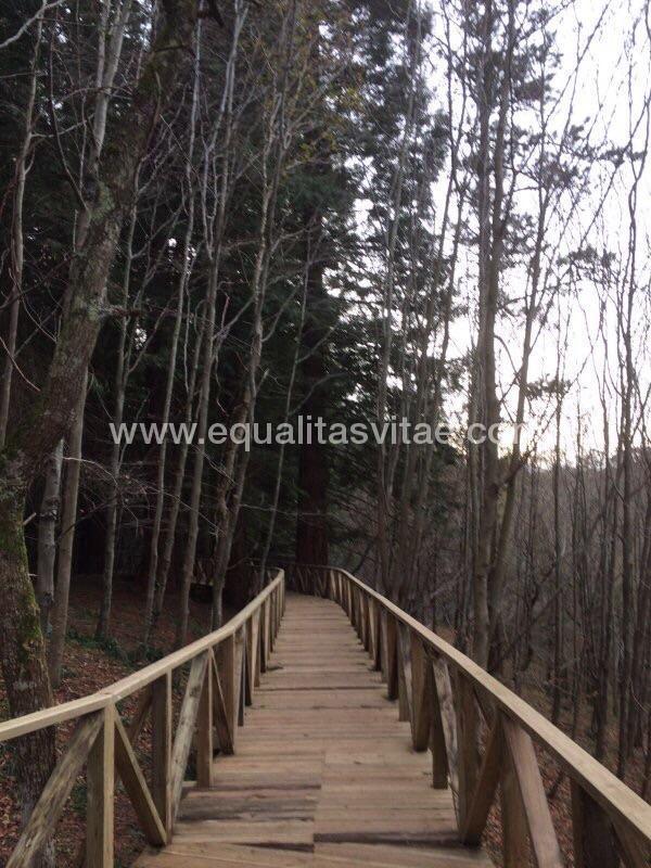 imagen principal de SENDERO ACCESIBLE MONUMENTO NATURAL SECUOYAS