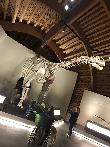 imagen de Réplica a tamaño real de un dinosaurio, interior del MUJA