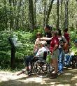 imagen de Senda de los Castaños Centenarios, accesible para personas con discapacidad