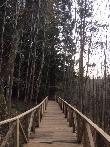 imagen de Pasarela accesible al monumento natural de las Secuoyas